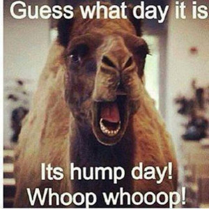 Hump day funny quote