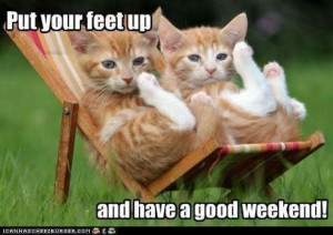 ... , Cat Naps, Crazy Cat, Weekend Quotes, Funny Animal, Enjoying Life