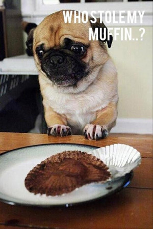 Funny Sad Puppy