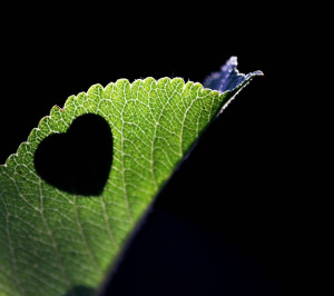 Leaf and Quote About Love