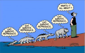 Topic: Funny Evolution ... (Read 1330 times)