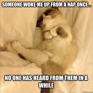 grumpy cat taking a nap, funny pictures