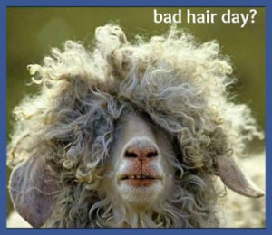 funny bad hair day quotes Funny Bad Hair Day