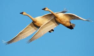 In pictures: 31 great examples of birds in flight