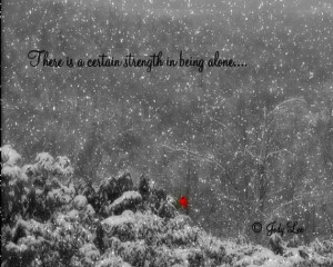 Cardinal Photograph Being Alone Inspirational Quote