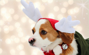 christmas dog wallpaper adorable christmas dog free christmas puppy ...