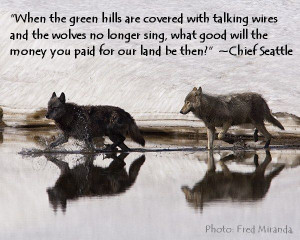 Wolf Quotes - BrainyQuote - HD Wallpapers