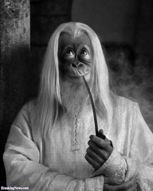 Funny Orangutan Gandalf