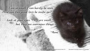 cat poetry