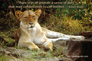 ... quotes and sayings lioness sayings lioness quotes sayings lioness