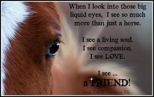 Horses Eyes Horse Quotes