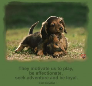 ... Us To Play Be Affectionate Seek Adventure And Be Loyal - Dogs Quote