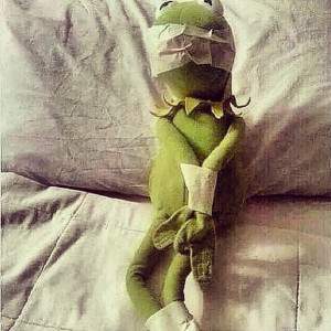 Kermit Quotes None Of My Business #kermit the frog
