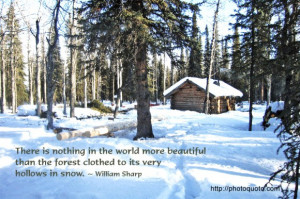 ... than the forest clothed to its very hollows in snow. ~ William Sharp