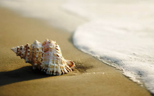 THE SEA / OCEAN AND THE SEASHELLS