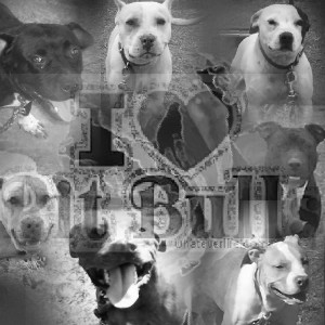 image detail for pit bull quotes good dogs submited images pic 2 fly