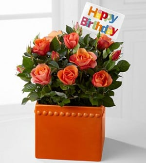 Search Results for: Happy Birthday Flowers Roses