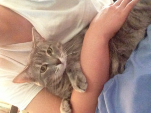 Cute Fat Cats Quotes Cute gray kitty grey cat fat