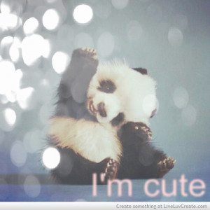 cute, cute d, love, panda, pretty, quote, quotes