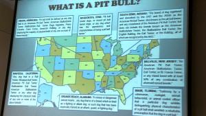 buzzardnbigdog.com » Turbocharging Your Pit Bull Adoption Program