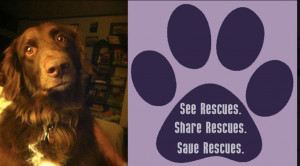 Rescue Dog Quotes Rescue dog blog: this is a