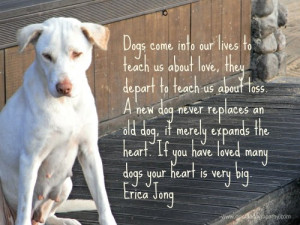 old dog it merely expands the heart if you have loved many dogs your ...