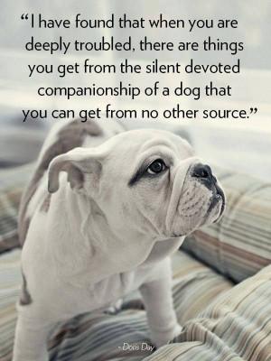 Companionship of a Dog!