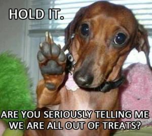 Funny dachshund