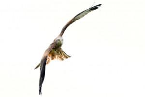 Birds-in-flight-with-the-Nikon-D800-6.jpg