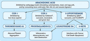 how arachidonic acid cascades down into damagingpounds in the body