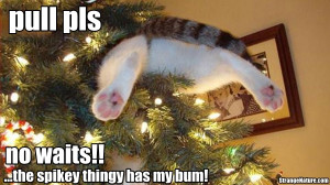 ... up already funny christmas animal pics 55 pictures of funny animals