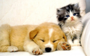 My Top Collection Dog and cat wallpapers 4