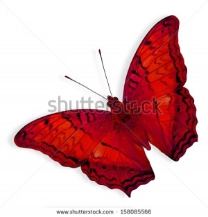 Beautiful Red Butterfly Mon