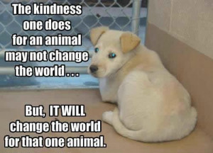 there are so many animals out there hungry alone and broken animals ...
