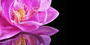 Orchid-flower-image-BG-wallpaper-for-edit-quotes-sayings-wishes ...