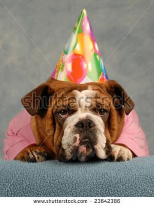 Stock Photo English Bulldog