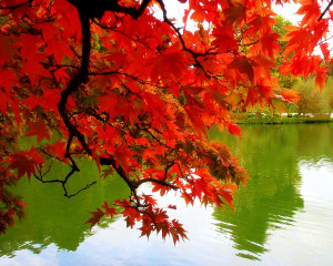 , oranges, yellows and browns are in great abundance. But some leaves ...