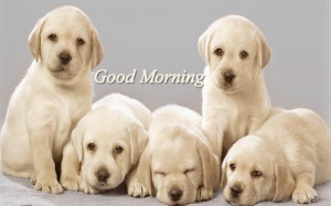 Good Morning quotes on dog photo