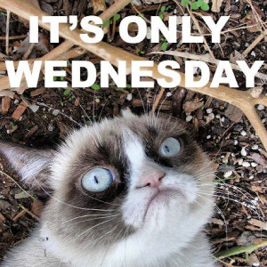 Grumpy Cat: it's only Wednesday