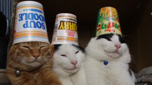 happy friday smile happy friday cat images happy friday everyone