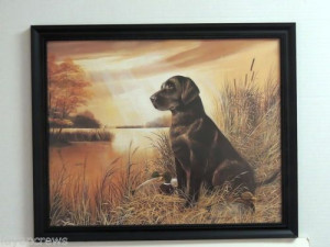 Chocolate Lab Dog Picture Duck Hunting Duck Decoys Framed Print 16x20 ...