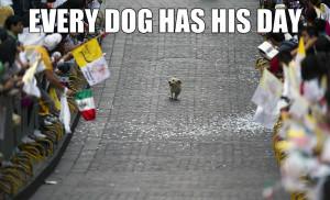Funny Birthday Meme Animal Dog memes 27 cute and funny