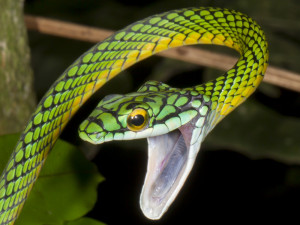 quotes about snakes source http marcus dobberstein de ascana snake ...