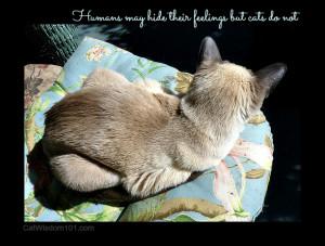 Cat Loss Quotes http://catwisdom101.com/meow-monday-life-death/