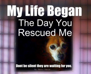 Please adopt and rescue. Don't buy while millions die. The dogs & cats ...