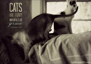 If you are blessed to have two or more cats, the possibilities for ...