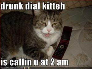 funny cat looking drunk funny cat looking drunk