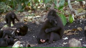 Species Tropical Rainforest Animal Family Tropics Baby Animal