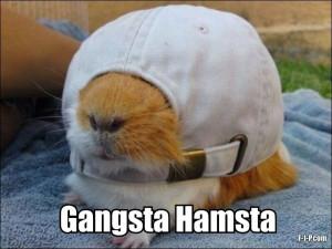Funny Gangster Hamster Joke Picture - Gangsta Hamsta