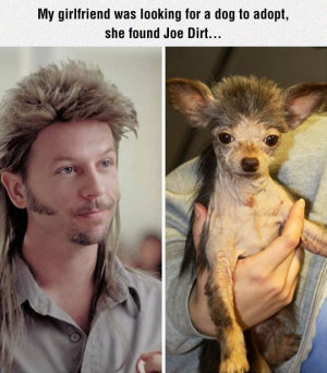 joe dirt s dog related posts to joe dirt quotes